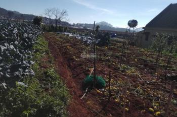Cần bán gấp lô đất nông nghiệp tại Xuân Thọ, Tp Đà Lạt