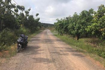 Cần bán 2200m2 đất trồng xoài trên đường 105 Phú Ngọc, Định Quán, sổ hồng riêng đường lớn