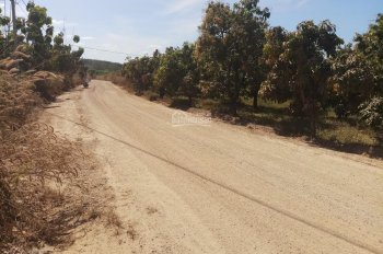 Cần bán gấp 2000m2 đất vườn giá 360tr/sào ở Phú Ngọc, Định Quán, Đồng Nai, LH: 0978962992