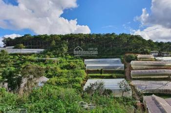 Bán đất xây khu biệt thự nghỉ dưỡng kết hợp homestay Làng hoa Vạn thành tp đà lạt