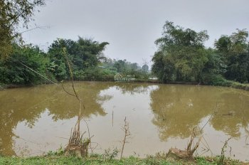 Cần bán 4000m2 đất làm trang trại nghỉ dưỡng, homestay, reslof tại Yên Bài, Ba Vì, Hà Nội