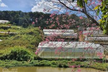 Cần bán dự án khu biệt thự nghỉ dưỡng kết hợp homestay có hồ nước rộng, view rừng thông xanh