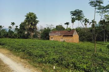 Cần chuyển nhượng lô đất 3370m2 đất làm biệt thự nhà vườn nghỉ dưỡng giá hấp dẫn tại Yên Bình