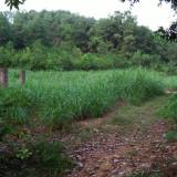 Bán lô đất xã Vân Hòa, Ba Vì Hà Nội