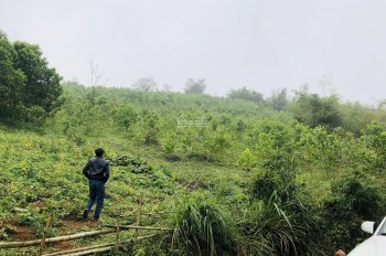 Gia đình cần bán gấp 3.6ha đất rừng sản xuất tại Lương Sơn