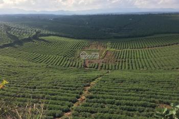 Đất Đà Lạt giá chỉ 450 triệu/nền