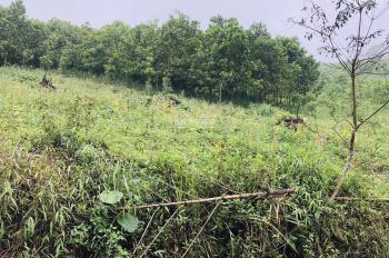 Bán 3.6ha đất rừng sản xuất đường bê tông lớn qua đất