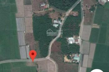 Kẹt tiền bán gấp lô đất lúa giá đầu tư đường ô tô tới đất xã Long An, LH: 0704487698