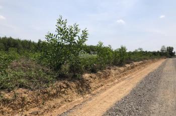 Cần bán 3 hecta ở đường ĐT 763 xã Xuân Bắc, Xuân Lộc, tỉnh Đồng Nai, đã có sẵn 300m2 thổ cư