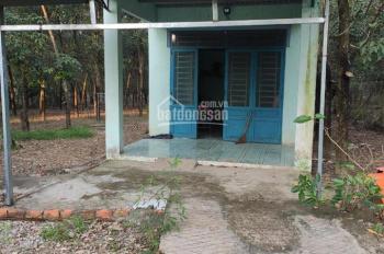 Chính chủ bán gấp nhà riêng tại Bình Dương, Bàu Bàng, Lai Hưng