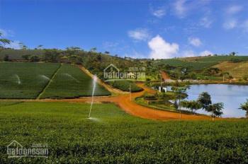 Chính chủ cần bán nhanh lô đất view hồ tại Đà Lạt, mặt tiền đường, sổ riêng. LH ngay 0908293212