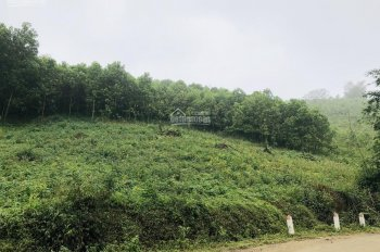 Cơ hội sở hữu 3.6ha đất rừng sản xuất, giá rẻ tại Cao Răm, Lương Sơn, Hòa Bình