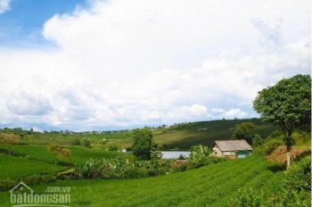 Bảo Lộc đất nền giá 300tr/nền có view hồ, đồi chè tận hưởng khí hậu trong lành