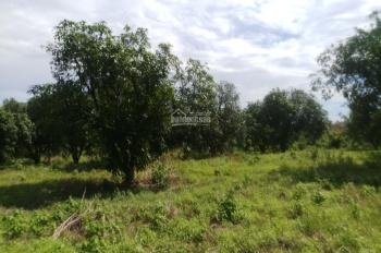 Cần bán 2 công, 2330m2 đất vườn, giá 600 triệu, ở La Ngà, Định Quán, Đồng Nai