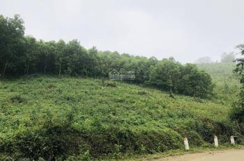 Cần bán 3,6ha đất rừng sản xuất giá rẻ tại Lương Sơn - Hòa Bình