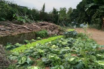 Gia đình cần bán nhanh 3600m2 xã Yên Bài, view Thảo Nguyên Xanh, đường bê tông rộng