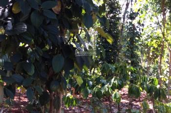 Chính chủ cho thuê đất view đẹp, trồng trọt, cafe hoặc làm homestay
