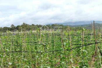Bán đất view rừng thông, đồi trà giá không thể tốt hơn