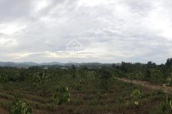 Khu nghỉ dưỡng Bảo Lộc Lâm Đồng, DT 8909m2