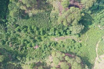 Cần bán lô đất lớn thích hợp đầu tư nghỉ dưỡng, view rừng thông, Xuân Trường Đà Lạt