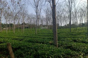 Chính chủ bán 1150m2 cực đẹp tại Bài - Yên Bài - Bà Vì giá chỉ 1.2 tỷ