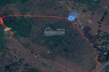 Bán đất mặt tiền QL14 cách Gia Nghĩa 12km giá 800 triệu / ha, liên hệ 0973073702 xem đất
