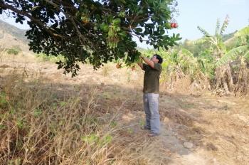 Đất làm gia trồng Cây Găng, xã Tân Thành, Hàm Thuận Nam, Bình Thuận. Khu đất này cực đẹp