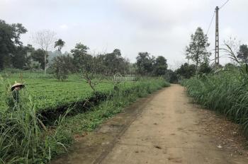 Cần bán 5 sào 1800m2 đất trang trại nhà vườn tại xã Vân Hoà, Ba Vì, giá 1,6 tỷ