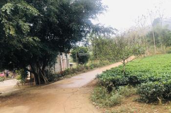 Cần bán 5 sào đất để làm trang trại nhà vườn tại thôn chong Yên Bài, Ba Vì, Hà Nội