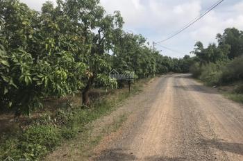 Bán 2300m2 (40mx57m) đất trồng xoài trên đường 105, Quốc Lộ 20, xã Phú Ngọc, đã có sổ riêng