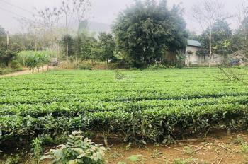 Bán đất trang trại nhà vườn diện tích 2000m2 tại Vân Hoà, Ba Vì, HN. Giá 800 ngàn/m2