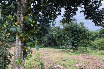 Cơ hội sở hữu lô đất giá rẻ với DT 2660m2, tại Lương Sơn, Hòa Bình