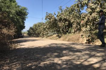 Chính chủ bán 2114m2 đất đang trồng xoài mặt tiền đá mi xã Phú ngọc, Định quán, Đồng Nai, giá 770tr