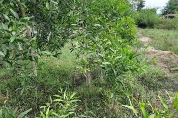 Bán đất thổ cư 100% tại ấp Gò Sao, xã Tân Phú, huyện Đức Hòa - Long An