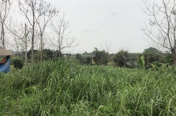 Bán 3 sào 1080m2 đất thích hợp làm trang trại nhà vườn tại Vân Hoà, Ba Vì, giá 300 triệu/sào