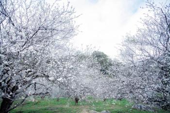 Bán đất nền biệt thự Vườn Cam căn hướng Đông Nam mặt kênh, 0912366433