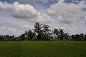 Cần bán 3ha đất nông nghiệp xã Lê Minh Xuân, Bình Chánh