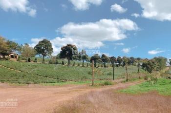 Đất nền thổ cư Bảo Lộc sổ riêng từng nền, chỉ 450 triệu/nền. Công chứng sang tên trong tuần