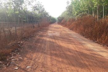 Bán 1,6 ha rẫy cao su có 250m mặt tiền đường liên huyện tại Đồng Phú, Bình Phước