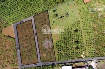 Chỉ 750tr sở hữu lô đất xây biệt thự, homestay nghỉ dưỡng Phường 2, Bảo Lộc