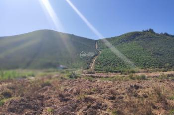 Đồi trà 9000m2 Đại Lào, điện đóm, đường đá 3,5m Có ao, nước quanh năm