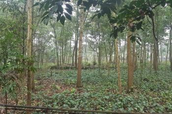 Cần bán lô đất tại xã Yên Bài, Ba Vì, Hà Nội DT 3193m trong đó có 300m đất ở có vị trí đắc địa
