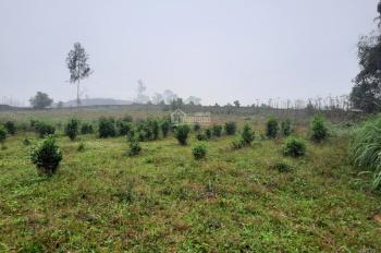 Cần bán 3.700m2 đất làm nghỉ dưỡng tuyệt đẹp tại Yên Bài, Ba Vì, Hà Nội
