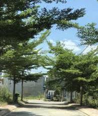 chủ kẹt tiền nên cần bán rẽ  gấp lô đất dự án Vạn Xuân đường 8, Lò Lu, cạnh Đông Tăng Long Quận 9