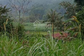Bán đất thổ cư trang trại nhà vườn DT 2300m2 tại Ba Vì, giá 280 triệu/sào