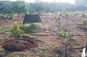 Bán 16 sào đất vườn sầu riêng tại ấp 94 (Km94, Quốc Lộ 20), Túc Trưng, Định Quán, Đồng Nai