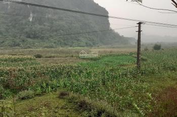 Sang nhượng gấp 9577m2 đất làm trang trại nhà vườn, có suối chảy quanh, tại Lương Sơn, Hòa Bình.