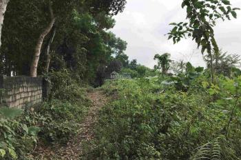 Bán đất sổ đỏ thổ cư xã Ba Trại, có sẵn trang trại đang hoạt động, đường bê tông view cánh đồng