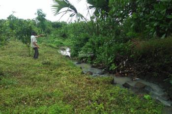 Đất trồng xoài Đài Loan, có 300m2 thổ cư, liên hệ: 0913.744.346 anh Tuấn