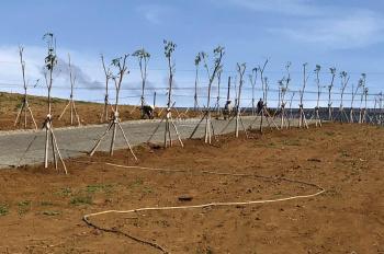 Đất nền nghỉ dưỡng Bảo Lộc - 350 triệu/ nền - thổ cư - sổ riêng